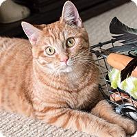 Adopt A Pet :: Marta - Chicago, IL