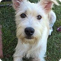 Adopt A Pet :: Harry - Baton Rouge, LA