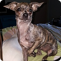 Adopt A Pet :: Guthrie - North Little Rock, AR
