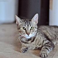 Adopt A Pet :: Nala - Santa Monica, CA