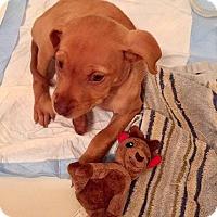 Adopt A Pet :: Moondance - West Warwick, RI