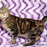 Adopt A Pet :: Delores - Salt Lake City, UT