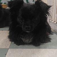 Adopt A Pet :: MAX - Cleveland, TN