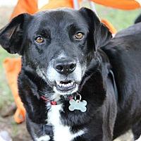 Adopt A Pet :: Spike - Cumming, GA