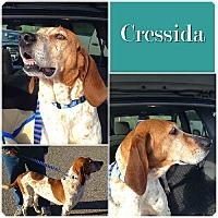 Adopt A Pet :: Cressida ADOPTED - Ontario, ON