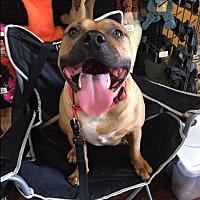 Adopt A Pet :: Roscoe - Plano, TX