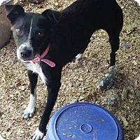 Terrier (Unknown Type, Medium) Mix Dog for adoption in Rexford, New York - Pretty Girl