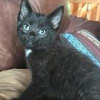 Adopt A Pet :: Jordan - McHenry, IL