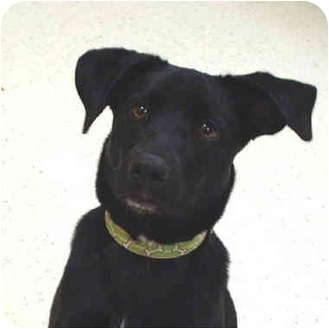 Terrier (Unknown Type, Medium) Mix Dog for adoption in McCormick, South Carolina - Benny