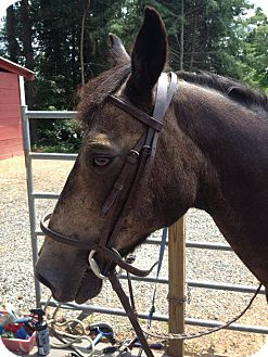 Quarterhorse/Pony - Welsh Mix for adoption in East Granby, Connecticut - Griffin