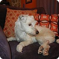Adopt A Pet :: Trevor - Courtesy Post - kennebunkport, ME