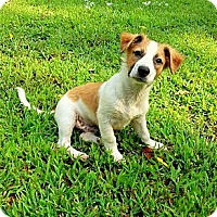 Adopt A Pet :: Clyde - Staunton, VA