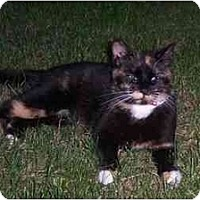 Adopt A Pet :: VERY URGENT!: Lacy - Quincy, MA