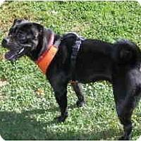 Adopt A Pet :: Jinxy - Warren, NJ