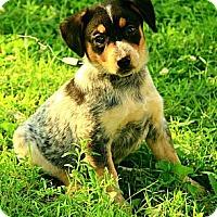 Adopt A Pet :: Charlotte - Staunton, VA