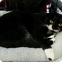 Adopt A Pet :: Squeakers - McDonough, GA