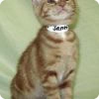 Adopt A Pet :: Santino - Powell, OH