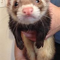 Adopt A Pet :: George - Navarre, FL