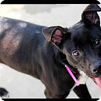 Adopt A Pet :: Princess - Goodlettsville, TN