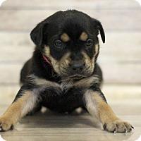 Adopt A Pet :: Jynx - Waldorf, MD
