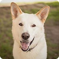 Adopt A Pet :: Bane - Dallas, TX