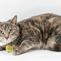 Adopt A Pet :: Erin - Fairhope, AL