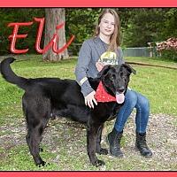 Adopt A Pet :: Eli - Oak Ridge, TN