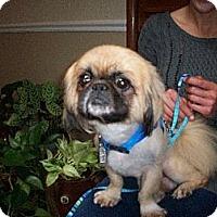 Adopt A Pet :: Fletch - Richmond, VA