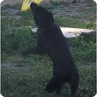 Adopt A Pet :: Rosco - Riverside, CA