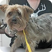 Adopt A Pet :: Faith - GAINESVILLE, TX