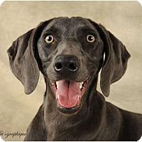 Adopt A Pet :: Della - Las Vegas, NV
