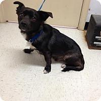 Adopt A Pet :: Bear - Lancaster, VA