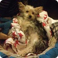 Adopt A Pet :: Laddie (FKA Happy) - Lancaster, TX