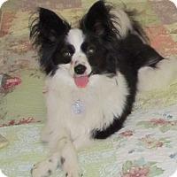 Adopt A Pet :: Baxter - San Diego County, CA