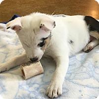 Adopt A Pet :: Christy - Pending Adoption - Post Falls, ID