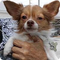 Adopt A Pet :: Ronnie - geneva, FL