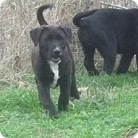 Adopt A Pet :: Sam in CT - East Hartford, CT