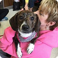 Adopt A Pet :: Charlie - Beavercreek, OH