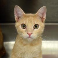 Adopt A Pet :: Justice 3 - Baltimore, MD