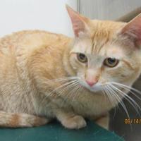Adopt A Pet :: Dallas - Williamsport, PA