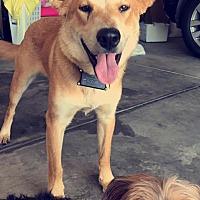 Adopt A Pet :: Moby - Springfield, MO