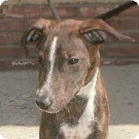 Adopt A Pet :: Tara - Bridgewater, NJ