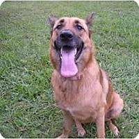 Adopt A Pet :: London - Green Cove Springs, FL