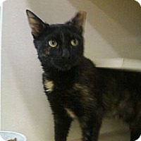 Adopt A Pet :: Harriet - Riverhead, NY