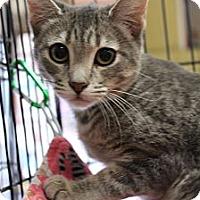 Adopt A Pet :: Poppy - Santa Monica, CA