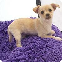 Adopt A Pet :: LEA - Mission Viejo, CA
