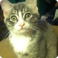 Adopt A Pet :: Oscar - Riverside, RI