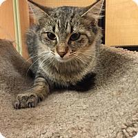 Adopt A Pet :: Ellie - Monroe, GA