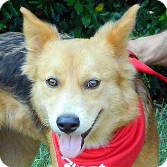Shepherd (Unknown Type) Mix Dog for adoption in McCormick, South Carolina - Moxi