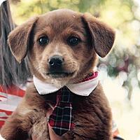 Adopt A Pet :: Kyle - Phoenix, AZ